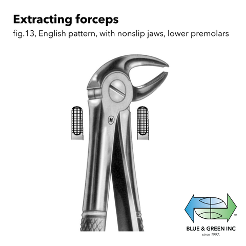 Extracting forceps (Z 111-13) Forceps - Blue & Green Inc.