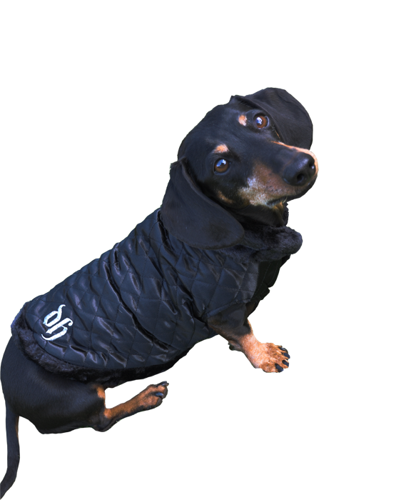 Black dog coat with fur trimmings and DH embroided in silver