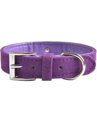 Velvet dog collar. Purple with diamantes