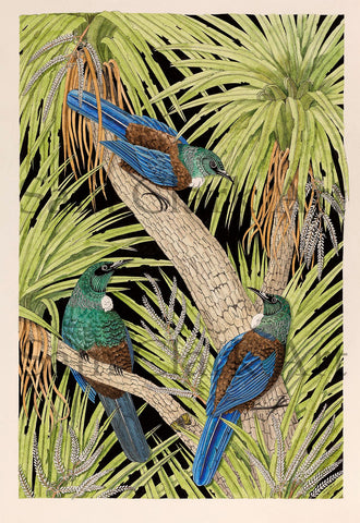 Tui trio Limited edition Giclee prints