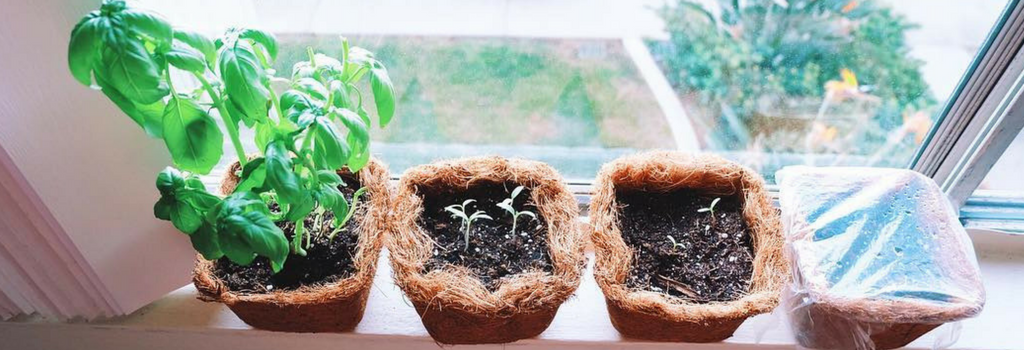 How to Grow Your Own Plant