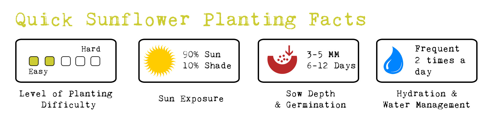 sunflower planting facts