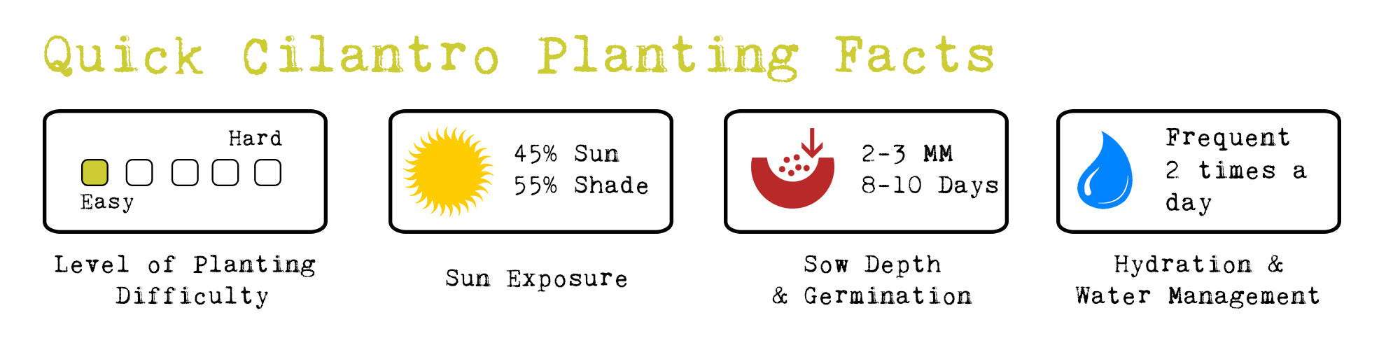 cilantro planting facts