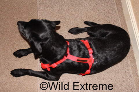 Med Full Body Dog Harness