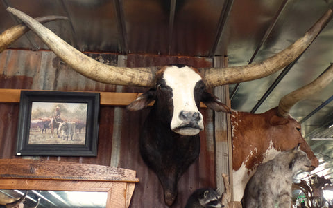 *SOLD* Longhorn Mount  NBWF27