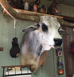 *SOLD* Longhorn Mount NBRAM