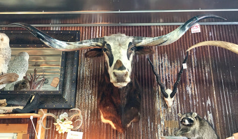 *SOLD* Longhorn Mount NTRIP48