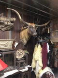 *SOLD* Longhorn Mount BOBKF10