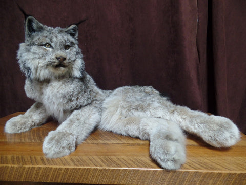 Laying Lynx Mount