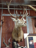 Red Stagg Mount