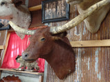 *SOLD* Longhorn Mount BRED25