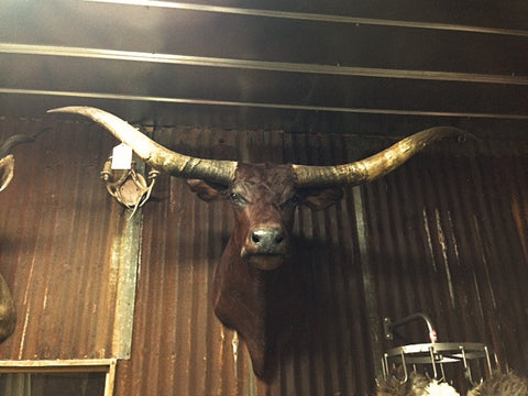 *SOLD* Longhorn Mount BDRD26