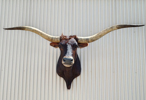 *SOLD* Longhorn Mount  SBRN20