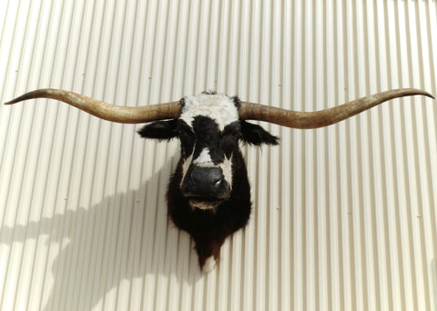 *SOLD* Longhorn Mount NBLW19
