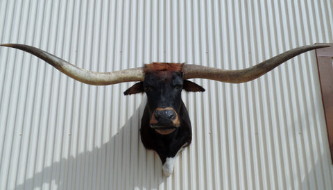 *SOLD* Longhorn Mount  NBLK11