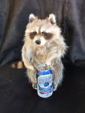 Raccoon With Big Flats Beer Mount