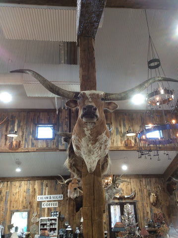 *SOLD* Longhorn Mount