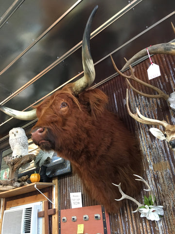 Mounts Amp Critters Taxidermy Yee Haw Ranch Outfitters