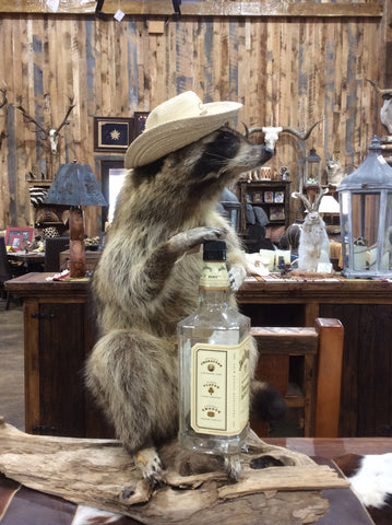 Raccoon with Jack Daniels