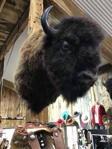 Bison Mount Herd Bull