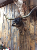 Mini Moo Longhorn Mount