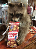 Raccoon With Cracker Jacks Mount