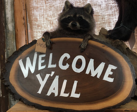 Welcome Y'all Raccoon Mount