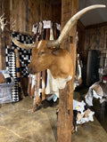 *SOLD* Tan and white longhorn mount