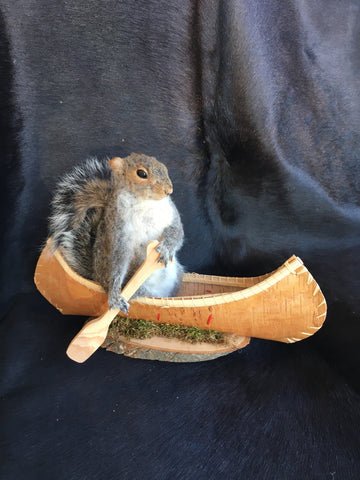 Squirrel In A Canoe Mount