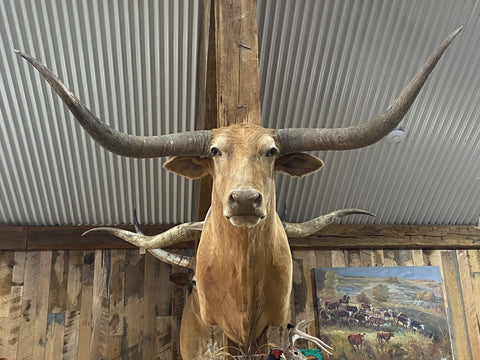 TAN LONGHORN MOUNT