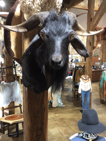 Spanish Goat Mount