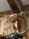 RED AND WHITE LONGHORN MOUNT * SOLD *