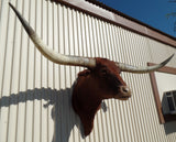 *SOLD* Longhorn Mount  NRED13