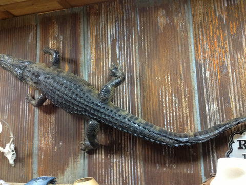 12 Ft Alligator Mount