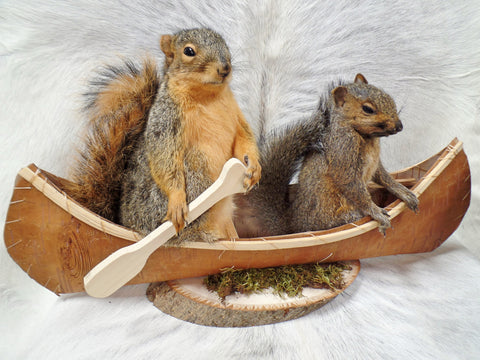 Squirrels In A Canoe