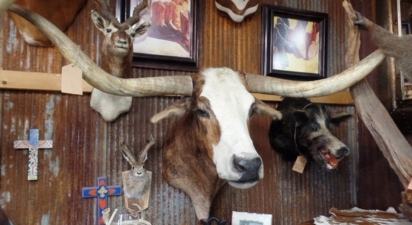 Longhorn mount nbrd yee haw ranch outfitters