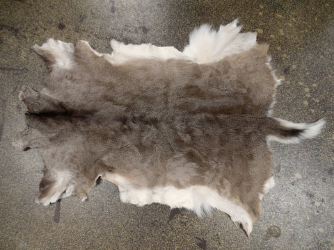 Whitetail Deer Hide