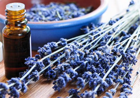 Essential Oil of the Month: Lavender