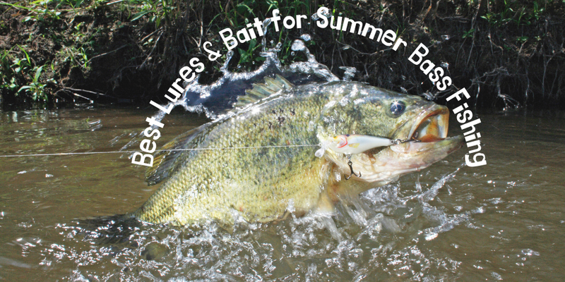 Best Lures & Bait for Summer Bass Fishing - Justforfishing.com