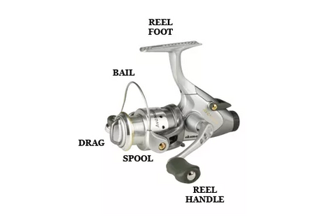 Spinning Reel Diagram