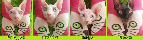 Do Sphynx Cats and Kittens need to wear clothes.  Sphynx Clothes. Sphynx kitten clothes.  Cat Clothes