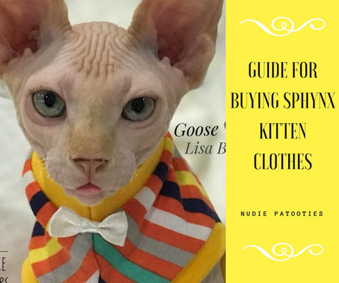 Guide for Buying Sphynx Kitten Clothes, Eight Months and