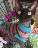 Colorful with Sparkle Stripe - Nudie Patooties  Sphynx cat clothes for your sphynx cat, sphynx kitten, Donskoy, Bambino Cat, cornish rex, peterbald and devon rex cat.
