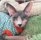 Crazy Daisy - Nudie Patooties  Sphynx cat clothes for your sphynx cat, sphynx kitten, Donskoy, Bambino Cat, cornish rex, peterbald and devon rex cat.