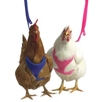 Chicken Harness & Leashes