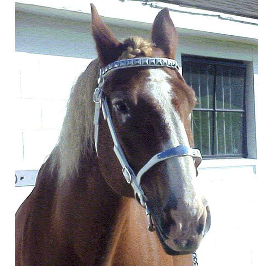Deluxe Show Bridles