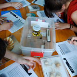 Teaching Science Through the Inquiry Process