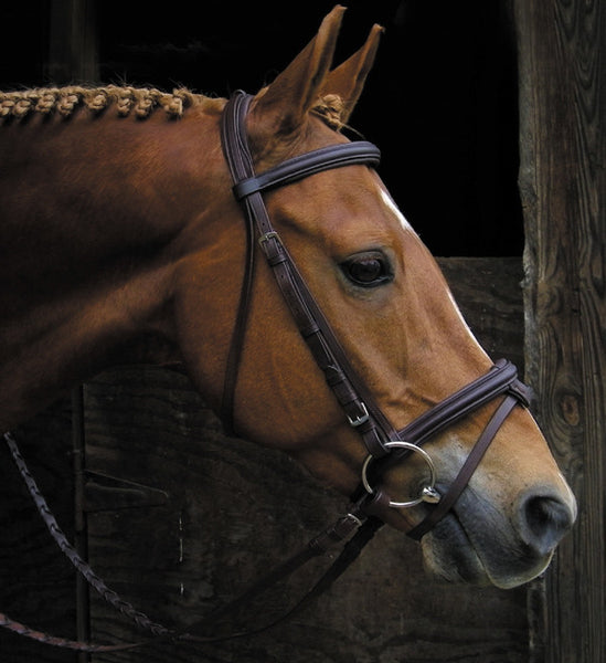 Signature Raised Padded Bridle by Smith-Worthington