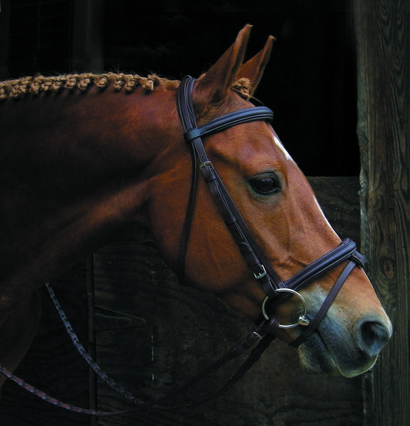 Elite Raised Padded Flash Bridle by Smith-Worthington