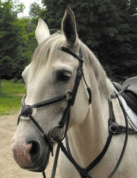 Elite Figure 8 Bridle by Smith-Worthington